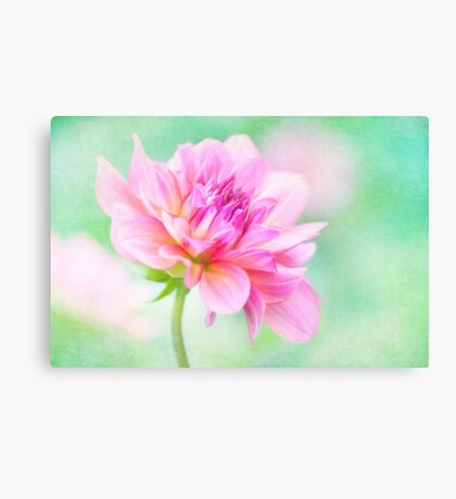 Dahlia Delight Canvas Print
