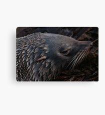 Close-Up Fur Seal Canvas Print