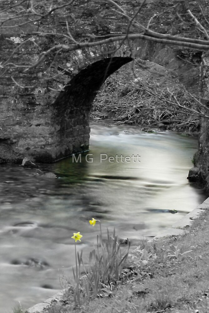 Signs of Spring by M G  Pettett