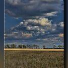 "The ""Serengeti""  by Sheryl Gerhard"