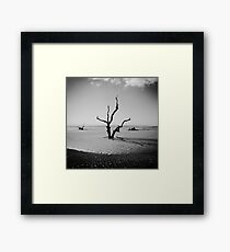 Boneyard Beach IV: Capers Island, South Carolina Framed Print