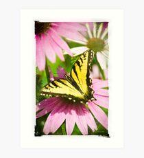 Antique Butterfly Art Print