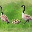 Geese Family Watercolor by Stacey Lynn Payne