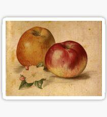 Vintage Apple Duo Sticker
