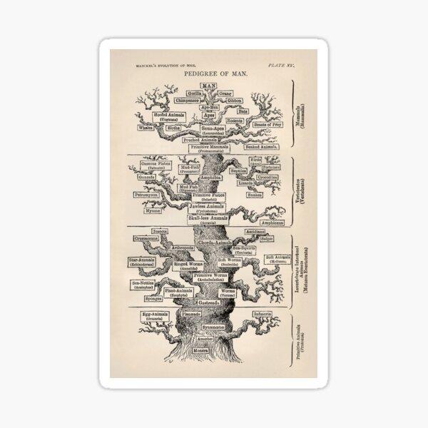 Ernst Haeckel Tree of Life Pedigree of Man Evolution Sticker