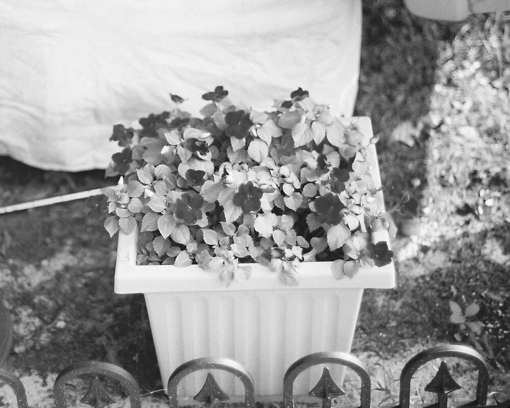 flowers by missymoo0510