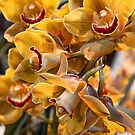 USA. Pennsylvania. Philadelphia Flower Show 2017. Yellow Orchids. by vadim19