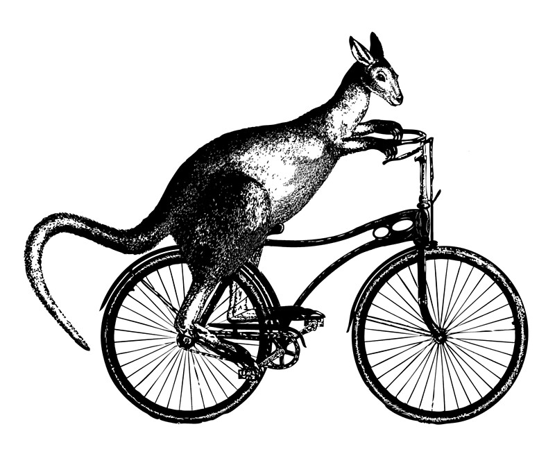 Kangaroo Riding Bicycle By Scooterbaby