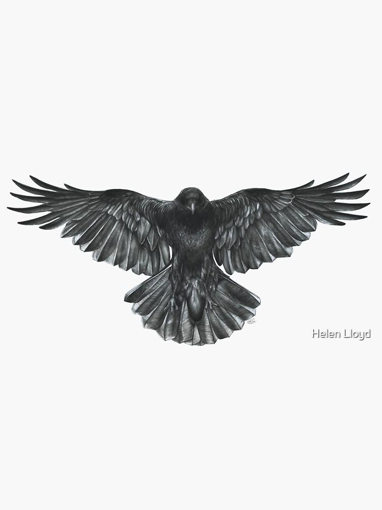 Crow in Flight by helenlloydart