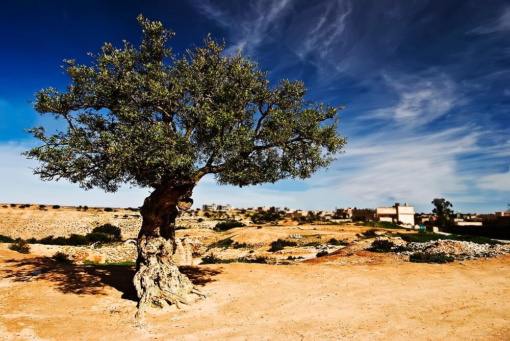 Olive Tree by Craig Hender