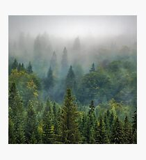 Misty Forest Beauty Photographic Print