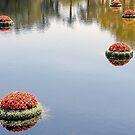 A Stillness on the Water  by John  Kapusta