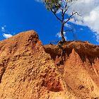 1647 Tree at Pink Cliff by Hans Kawitzki