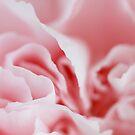 Pink Swirls by Christa Binder