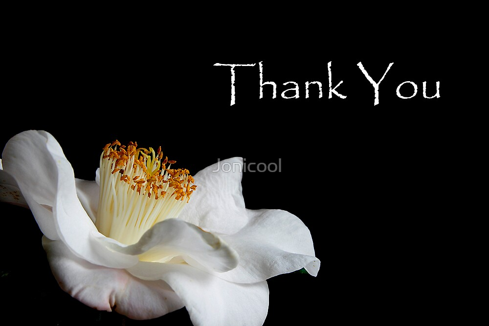 Thank You - White Camellia by Jonicool