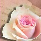 A Rose Is A Rose Is A Rose by Rosemary Sobiera