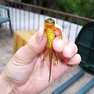 Speckels the Salamander by hallucingenic