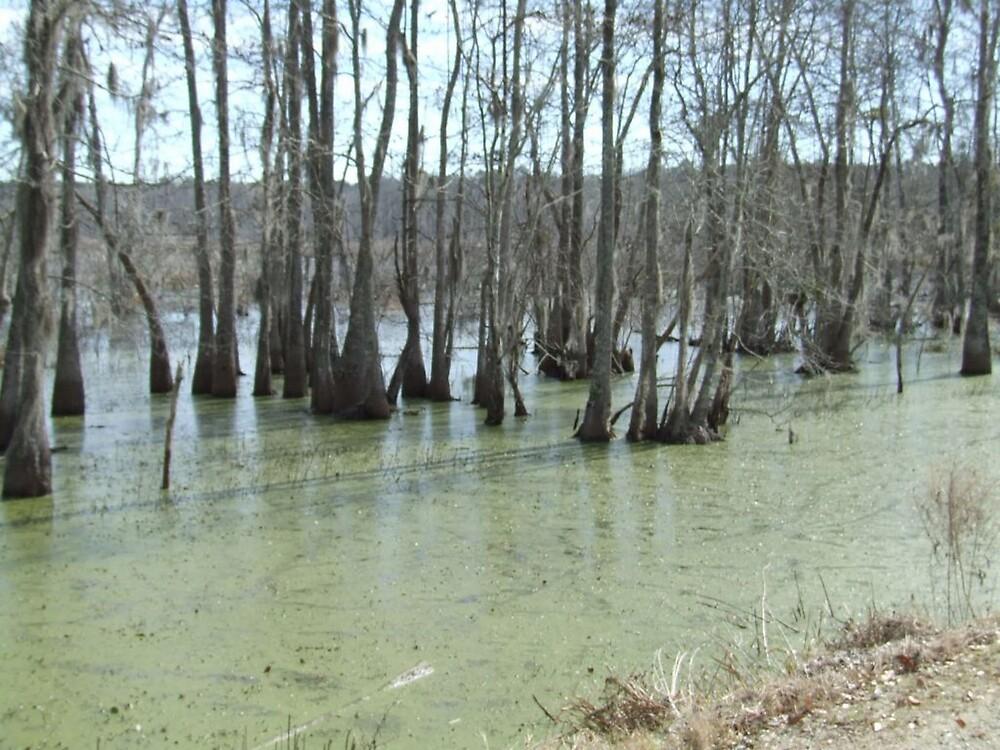 South Carolina Salt Marsh 6 by Ray1945