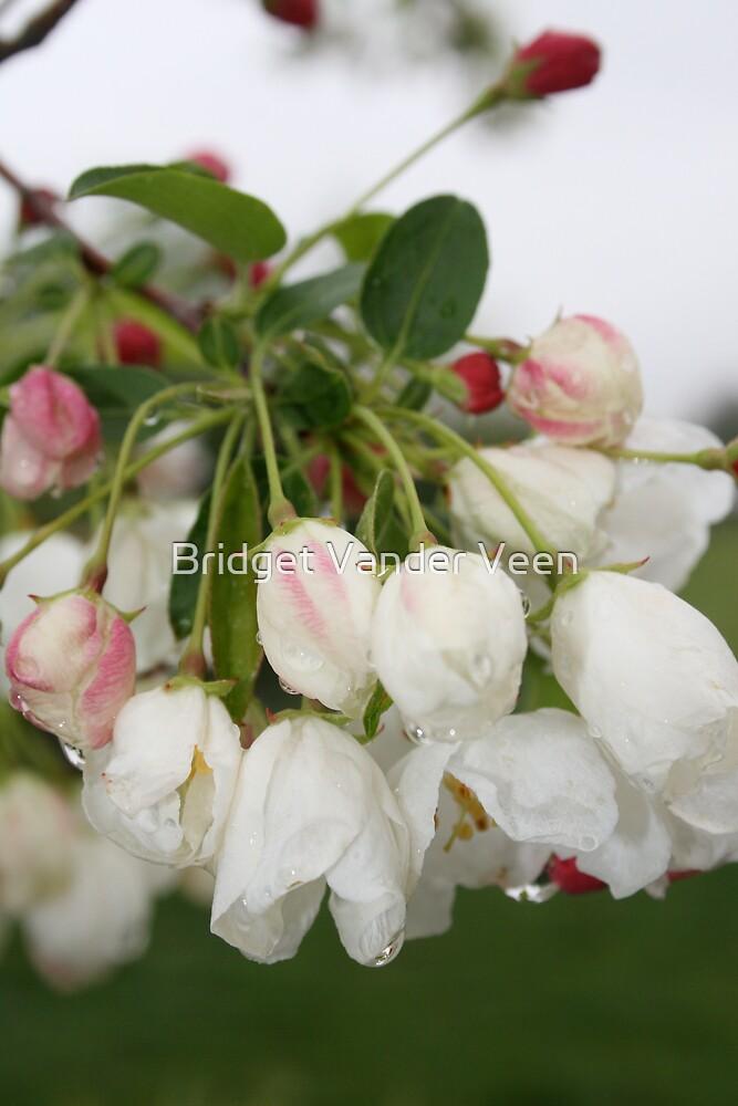 Flower buds by Bridget Vander Veen