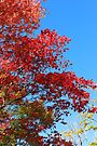 Autumn is in the air_Mt Wilson by Sharon Kavanagh