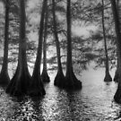 Cypress trees Tenessee   by Shell59