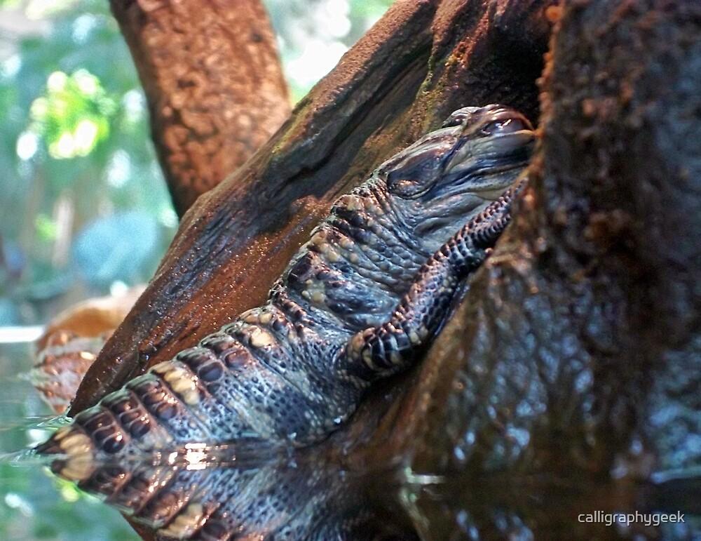 Sleeping Gator by calligraphygeek
