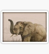 African elephant with raised trunk.  Sticker
