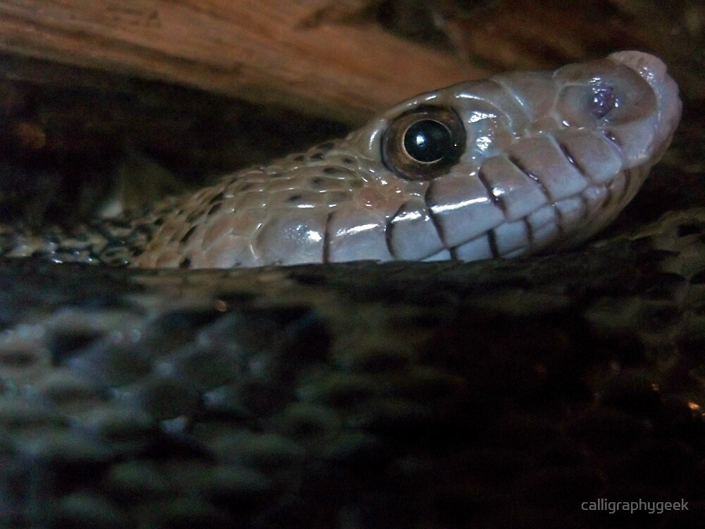 Curious Snake by calligraphygeek
