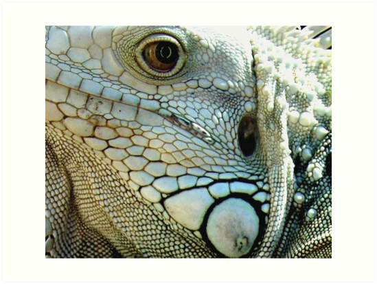 IGUANA EYES by May Lattanzio