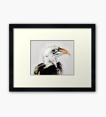 Red-billed Hornbill ,Samburu, Kenya Framed Print