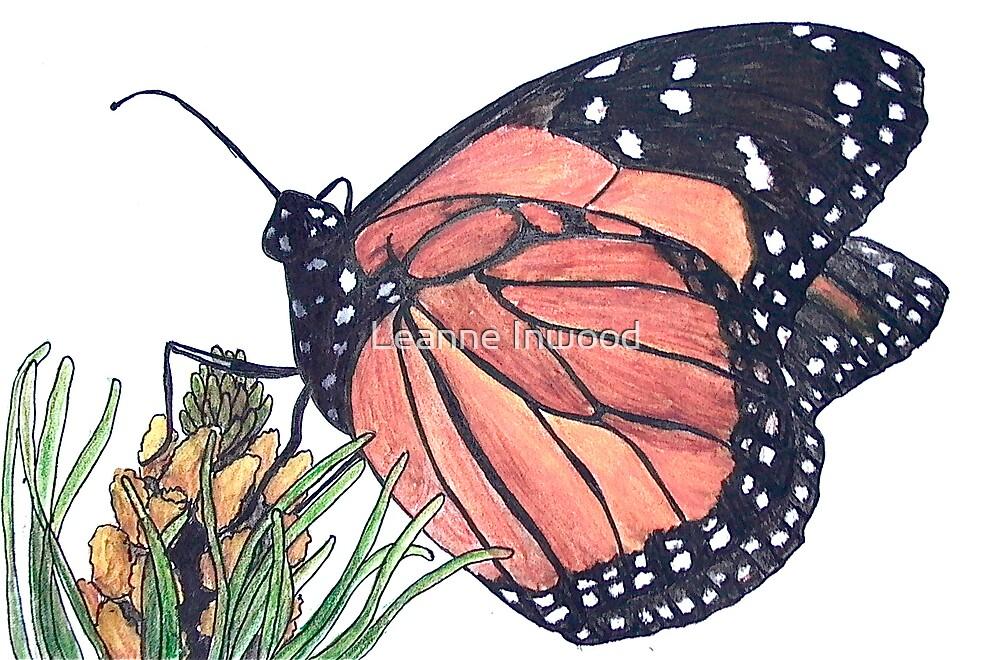 butterfly by Leanne Inwood