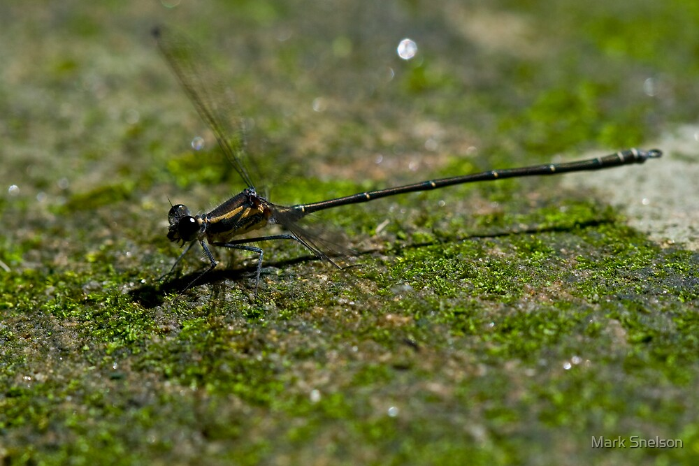 Dragonfly on Moss by Mark Snelson