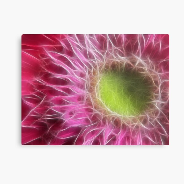 Pink Gerbera Abstract Metal Print