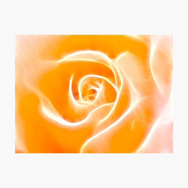 Glowing Rose Photographic Print