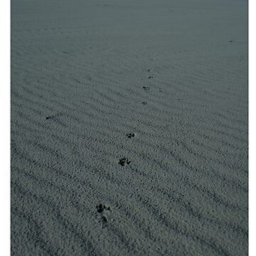 Dingo Footprints  by robvmcdonald