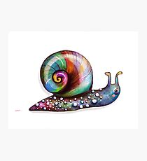 Rainbow Snail Photographic Print
