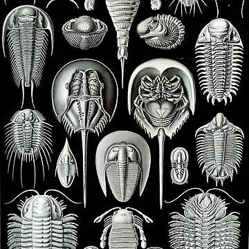 Haeckel Trilobite by neonxiomai