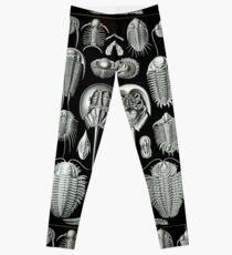 Haeckel Trilobit Leggings