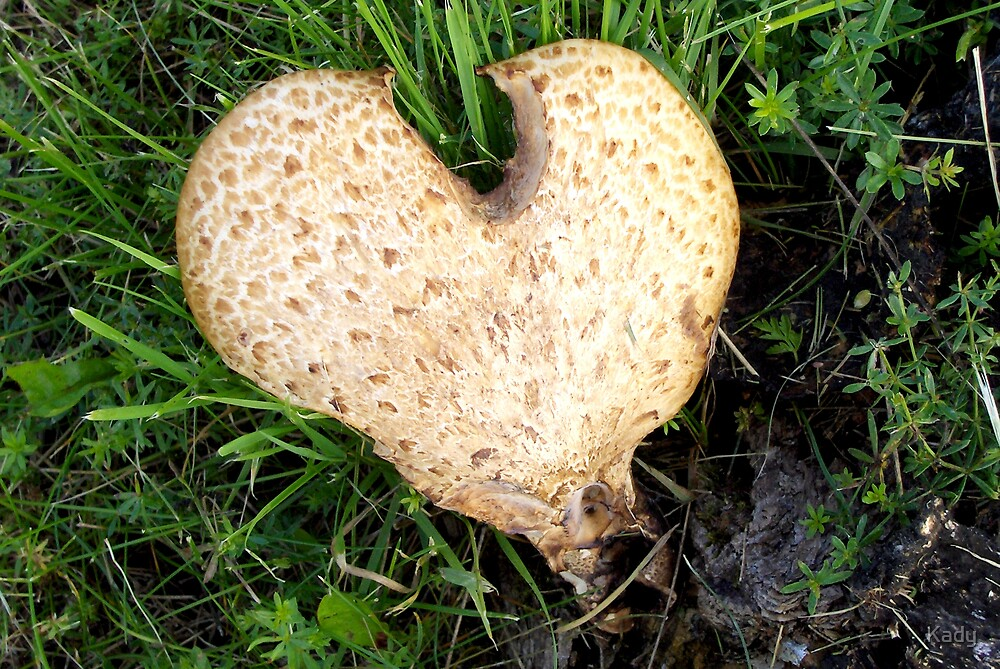 Love is everywhere.. by Kady