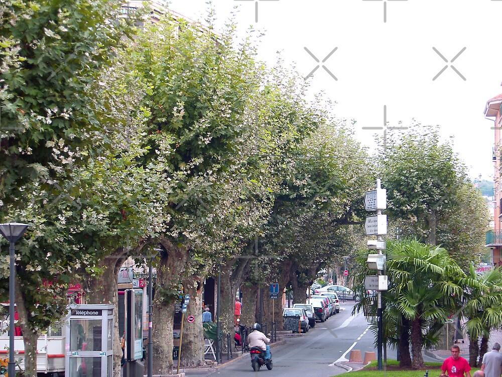 Tree Lined Street by Tom Gomez