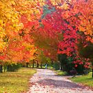 Autumnal Glory by Philip Johnson