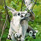 Lemur Photo - Family Portrait by Martine Carlsen