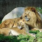 Lion Photo - Mom and Dad by Martine Carlsen