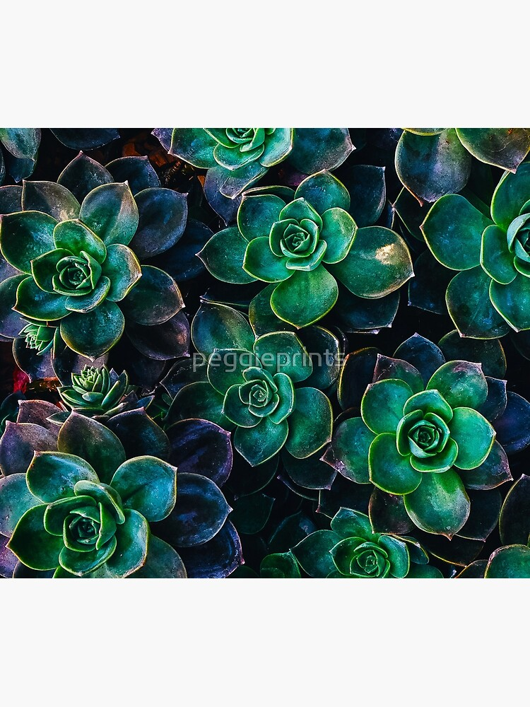 Succulent fantasy by peggieprints