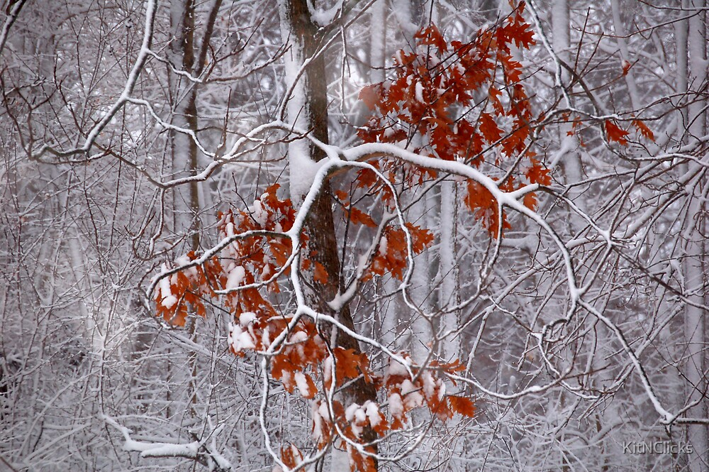 Fall into Winter by KitNClicks