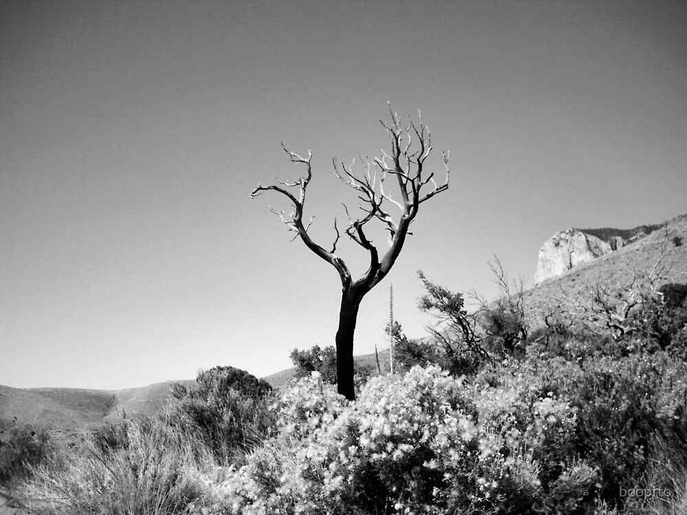 Dead Tree, Blue Sky in Black & White by boopfto