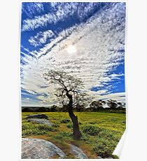 1617 Tree and clouds Poster