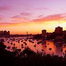 Vibrant Hues in Lavender Bay by Jen Waltmon