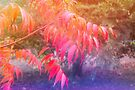 Dreaming of Autumn by Elaine Teague