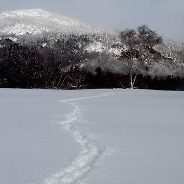 Trail to the Birch by waynedking